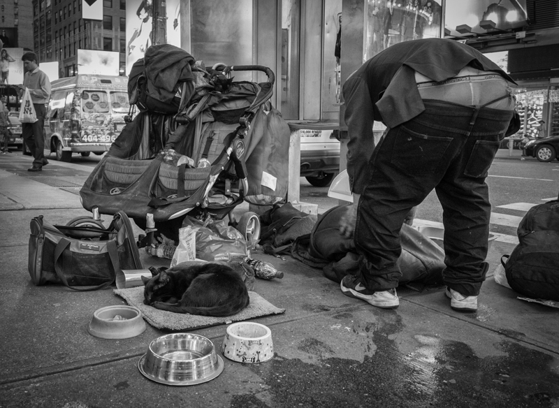homeless man times square two cats, Megan Crandlemire Photography