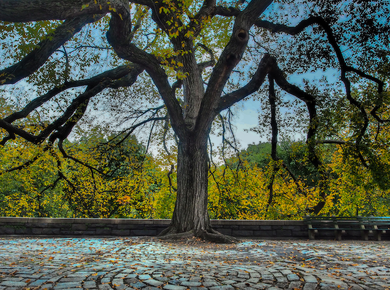 Honoring NYC: Photo Story 3 - Just the Trees