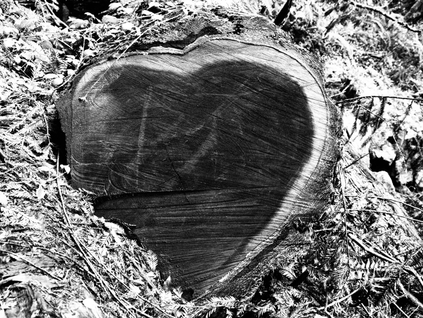 wood heart, Muir Woods, Megan Crandlemire Photography